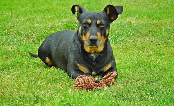 gryzaki dla psa