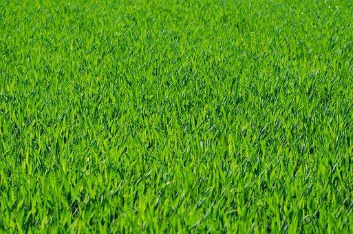 zakładanie trawników wrocław