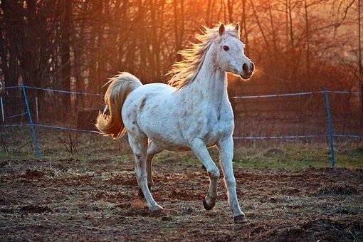 maść chłodząca na ścięgna dla konia