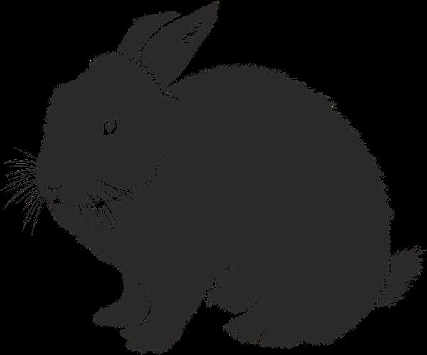 stalowe paśniki dla królików